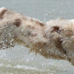 Hundetrainerausbildung – 6 Finanzierungsmöglichkeiten aus der Praxis
